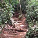Die hübsche Marschroute durch den Tschungel