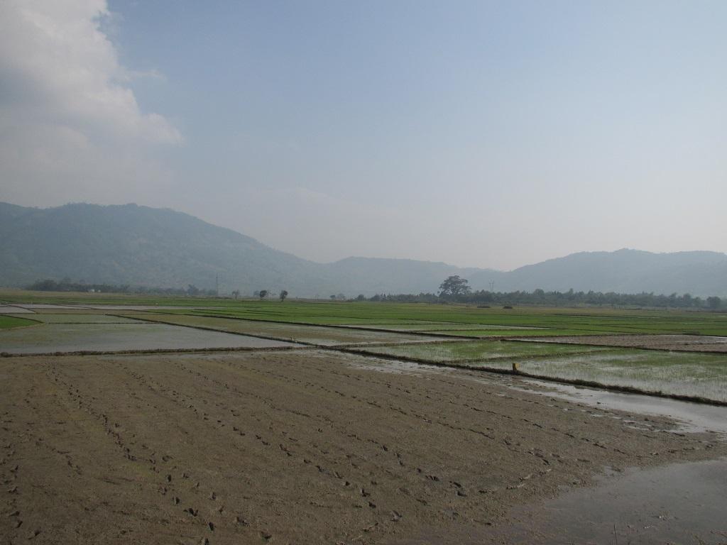 Reisfelder hat es im Flachland unendlich viele.
