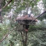 Per Seil in das Baumhaus