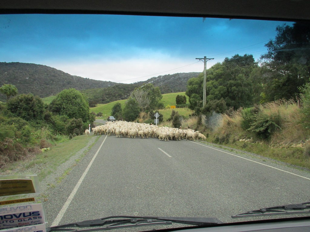 Vorsicht Schaf auf der Strasse!